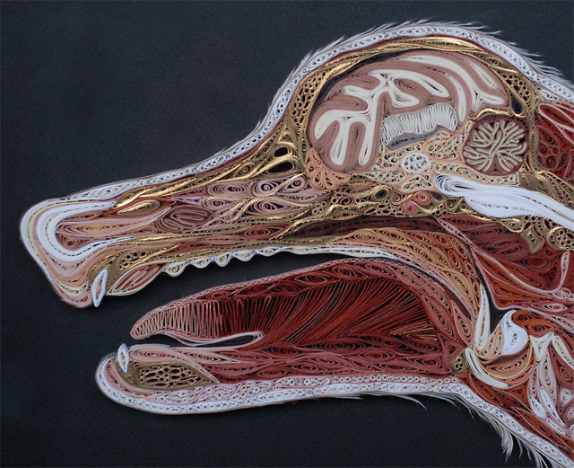 Quilled Paper Anatomy by Lisa Nilsson
