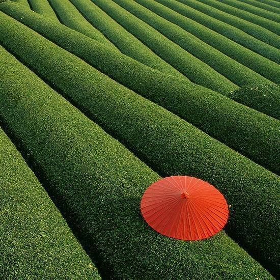 Freeyork: Red Umbrella in Green Fields Photo
