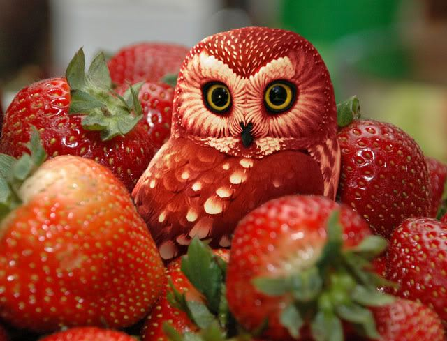 Strawberry Owl Food Photography