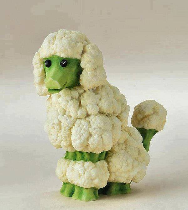 Cauliflower Dog